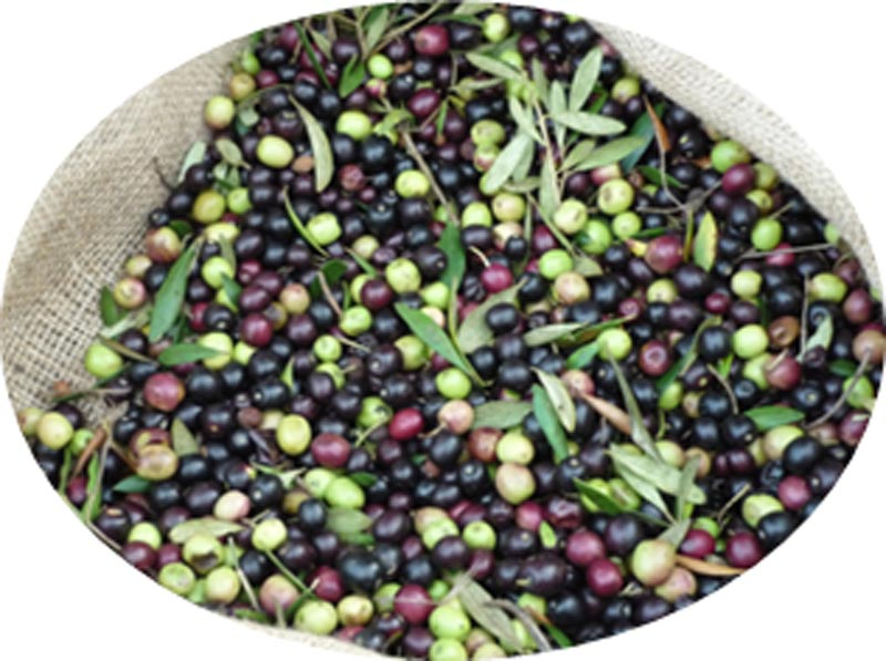 Studies on the cuticle and cell walls of olive fruits: Composition, ripening-related changes, and the influence of agronomic factors