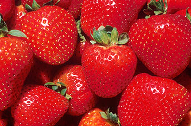 Mitigation strategies to reduce the microbial risks and improve the quality and safety of frozen and ready-to-eat strawberries