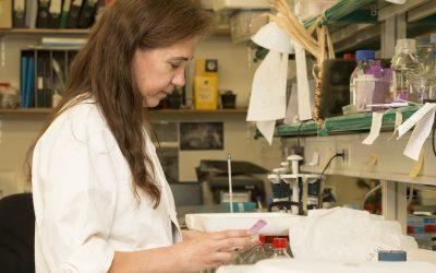 Teresa Capell Reseacher of Agrotecnio will recieve the Creu de Sant Jordi award