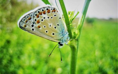 Butterfly monitoring schemes could be used for detecting the impacts of agriculture on biodiversity