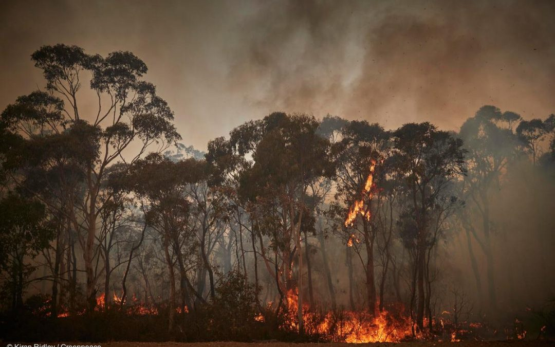 An Agrotecnio researcher takes part in a research that conclude Australia fires show climate change is ahead of schedule