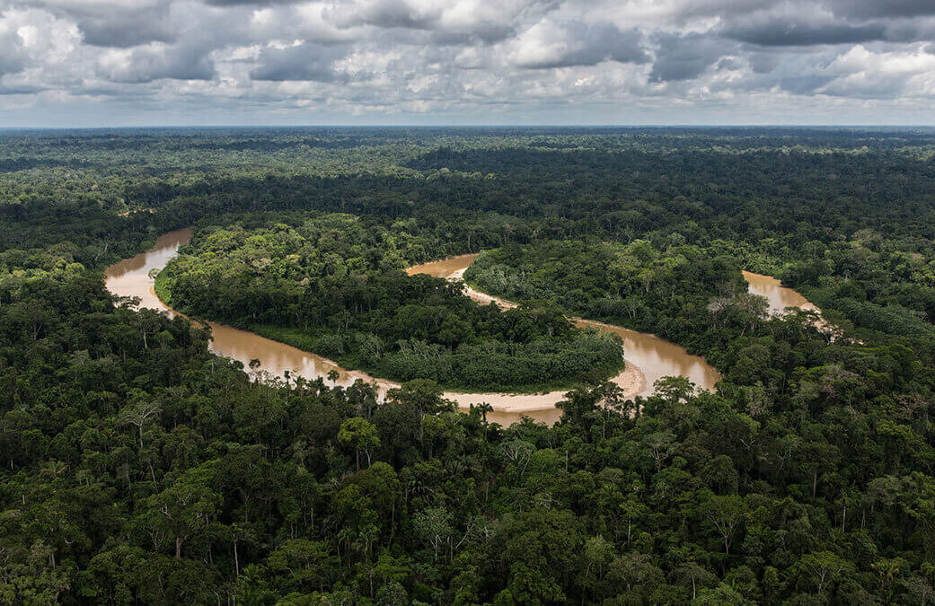 Elaboran el mapa global de flujos de carbono en los bosques del siglo XXI