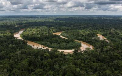 Elaboren el mapa global de fluxos de carboni en els boscos del segle XXI